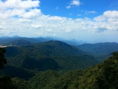 Jungle trail, Cameron Highlands