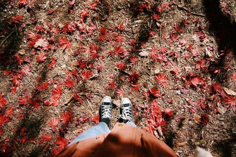 Breenhold Gardens of Mount Wilson Red Leaves