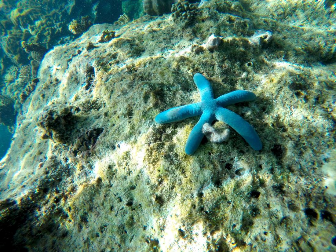 Blue Sea Star, Palawan