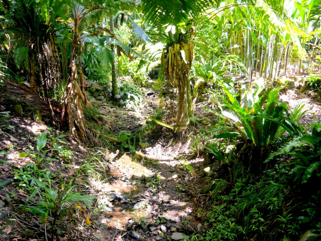 Cairns, Australia, Rainforest