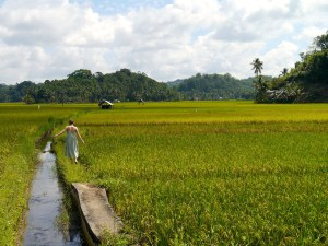 Bohol, Rice Fields