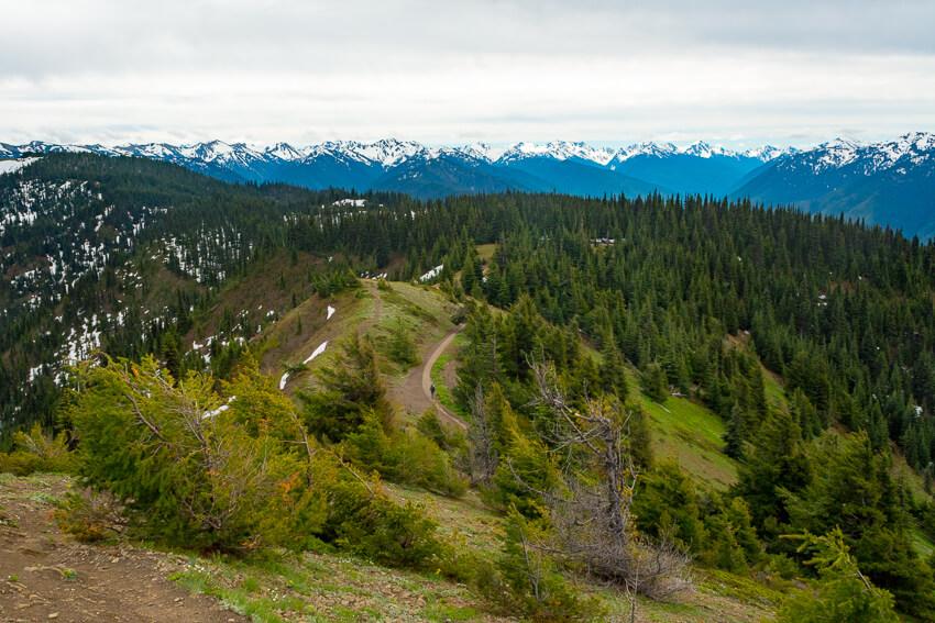 10 Reasons to Visit Olympic National Park Hurricane Ridge