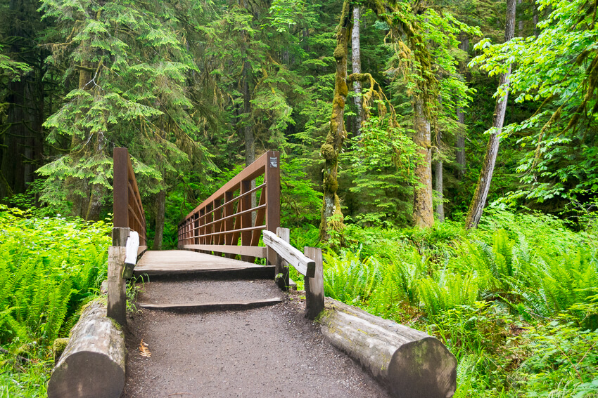 10 Reasons to Visit Olympic National Park rainforest