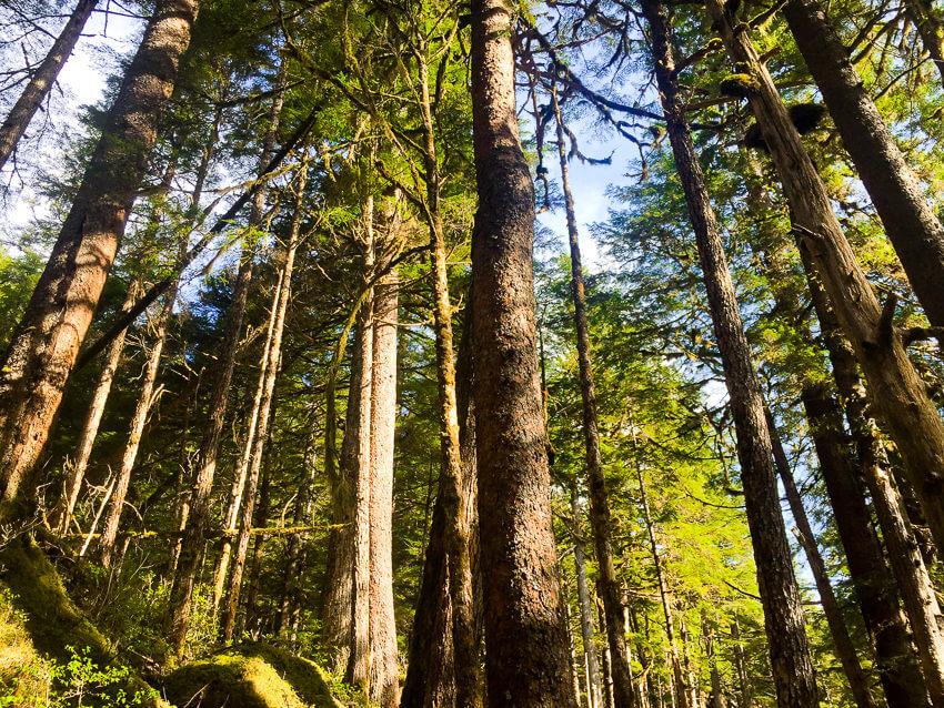 Exploring the Wilderness of Southeast Alaska