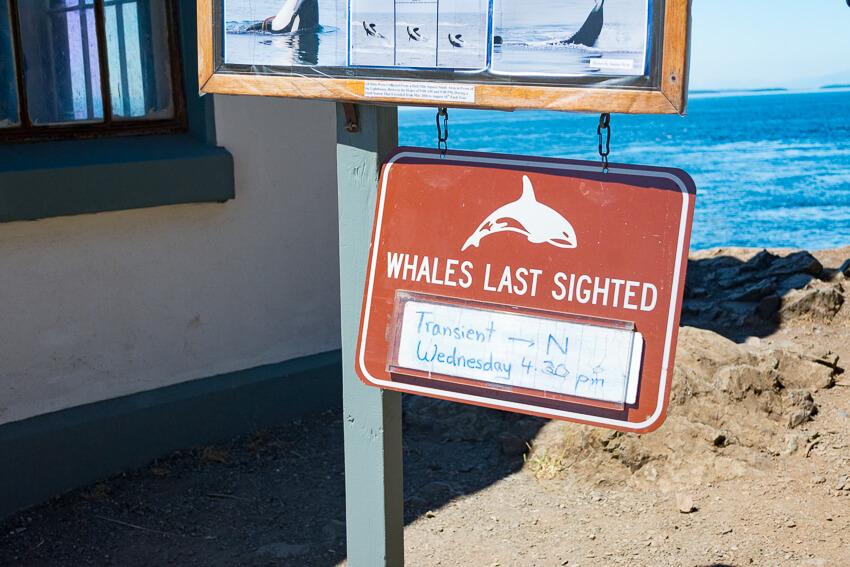 visiting san juan island whales