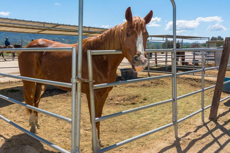 temecula valley horseback riding