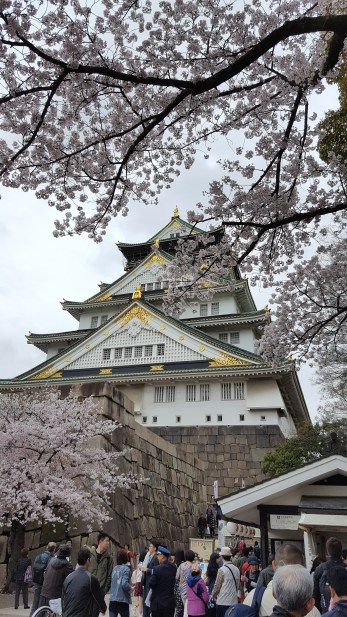 OsakaCastle_cherryblossoms