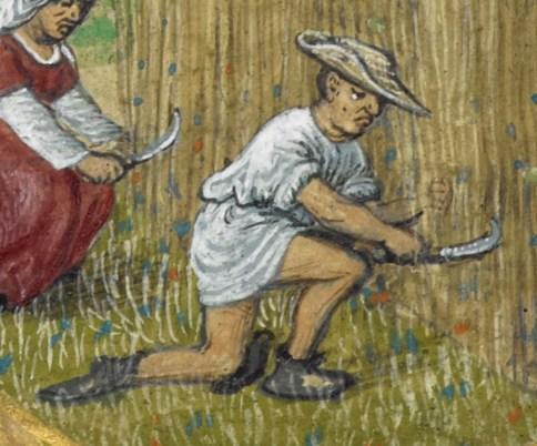 Peasant harvesting, 1485-1490