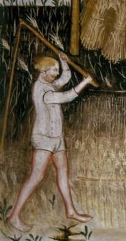 Barley, Tacuinum Sanitatis 1370-1400