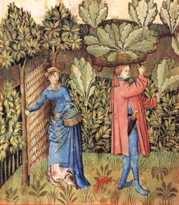 La récolte des choux Tacuinum Sanitatis, XVe siècle Paris, BnF, Département des manuscrits, Latin 9333 fol. 20
