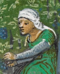 Veil wrapped around her head while working a wine field. c. 1485-1490