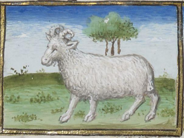 BnF Latin 1176, 1400's