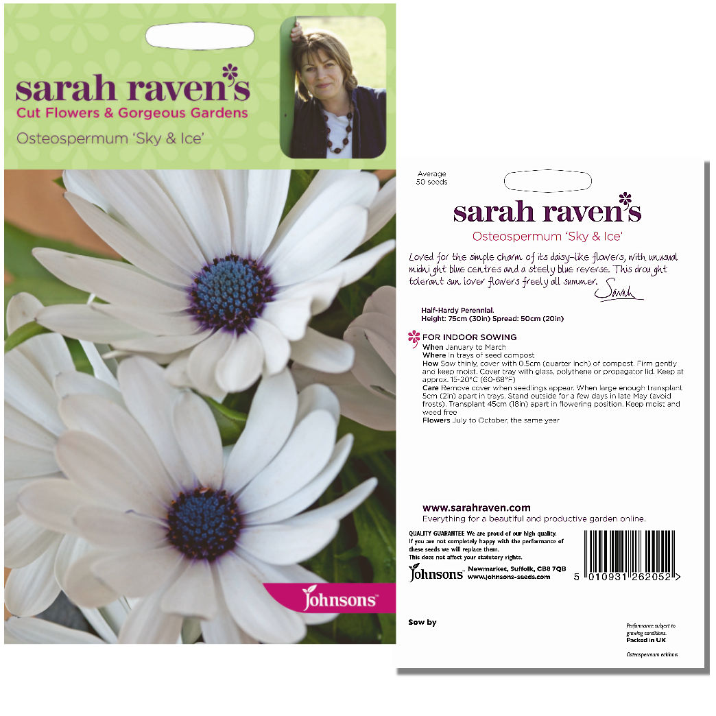 Sarah Ravens Osteospermum Sky Ice Seeds By Johnsons We Post