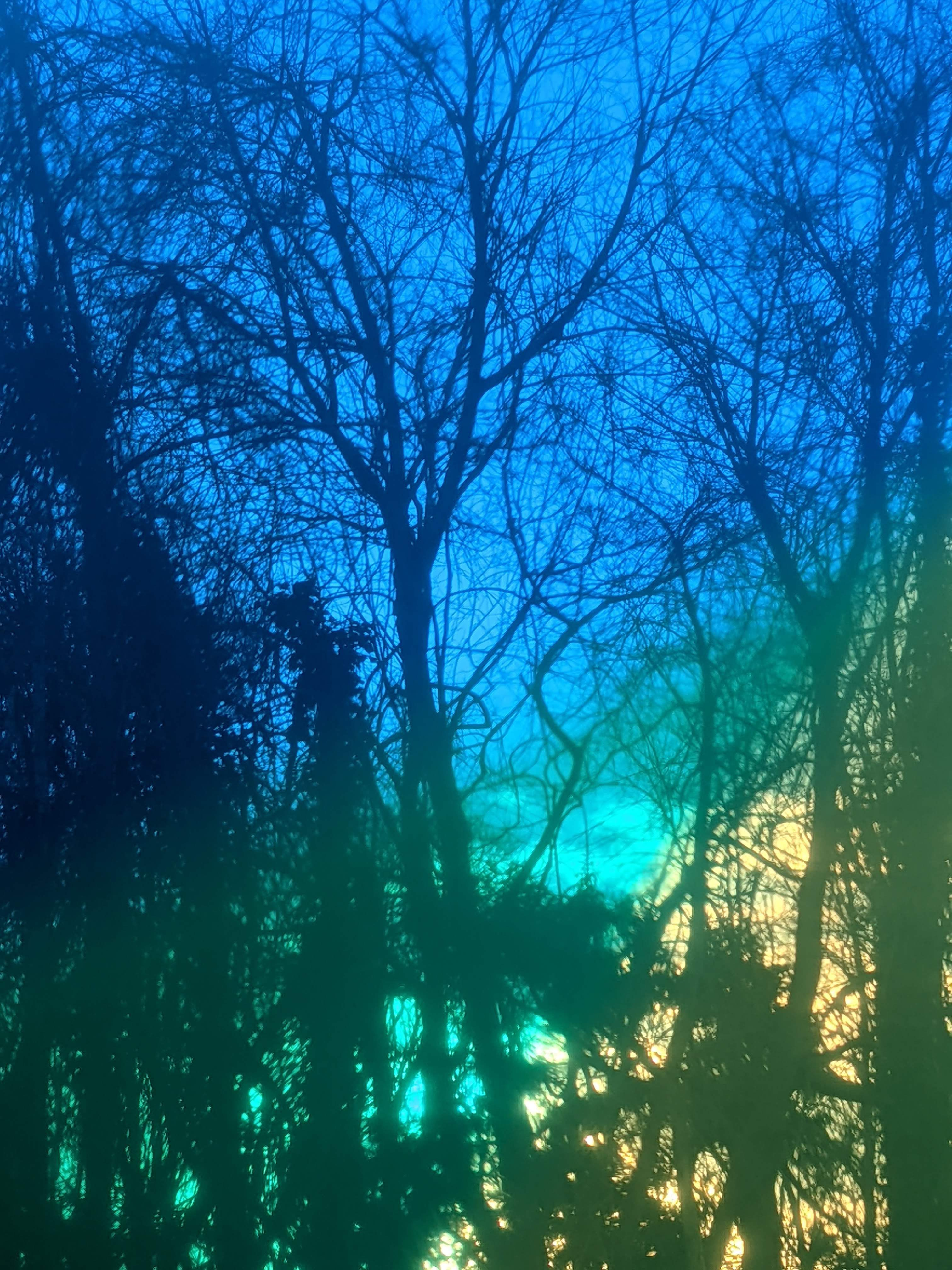 An image of trees with a blue, green, and yellow toned sky in the background.