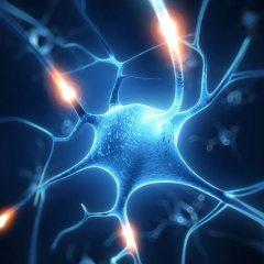 Bruce H. Lipton: Biologija ljubavi – kako stanice čuvaju tajne naših srca