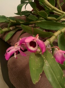 Orquídea en su primer floración