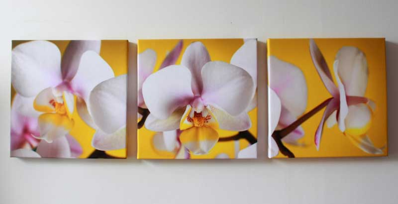 What is harmful orchids in the apartment  Orchid in the