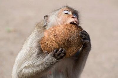 Monkey Buffet Festival in Lopburi, Thailand