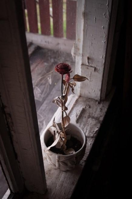 ...den torkade rosen kändes malplacerad...