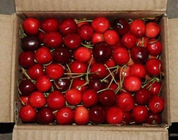 Kashmiri cherry