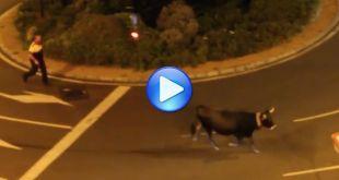 Una vaca Tudanca por Barakaldo