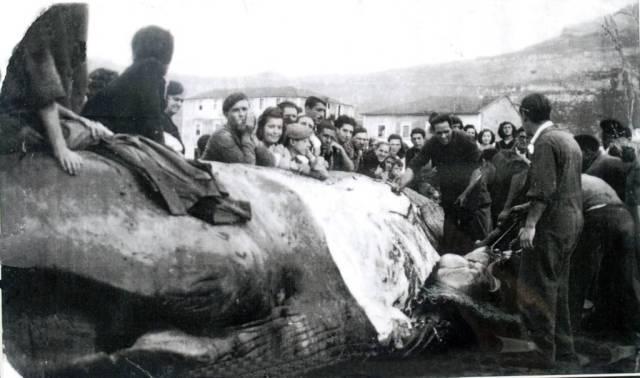 Resultado de imagen de ballena santoña laredo