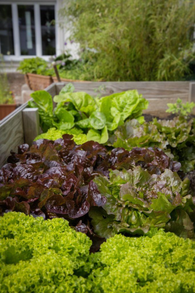 8 bonnes raisons d'avoir un potager : végétaux à porté de cuisine !