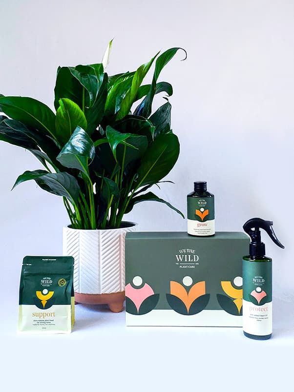 Big Happy Plant and Care Pack