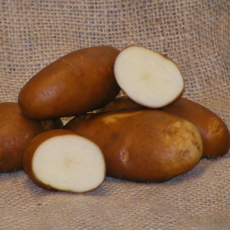 The Best Scab Resistant Potatoes