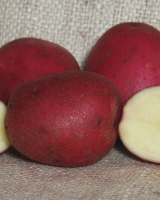 Grow Red Duke of York Potatoes