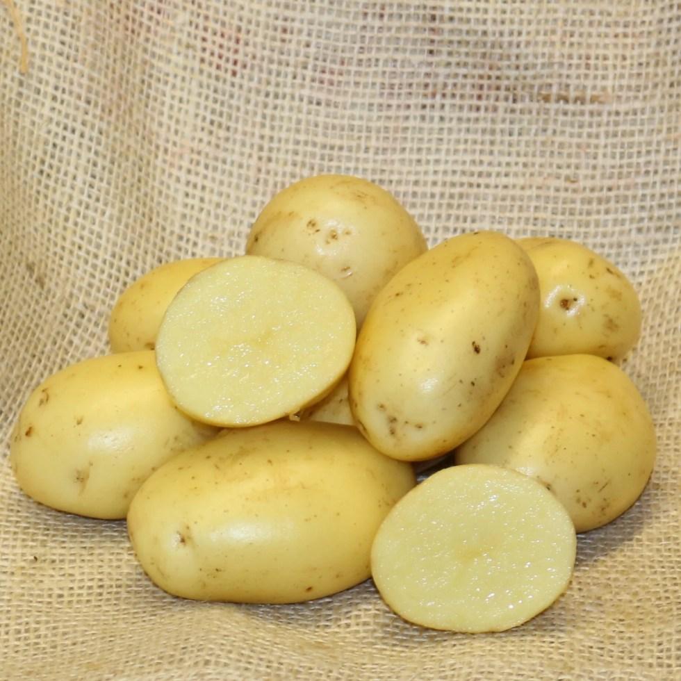 The Best Blight Resistant Potatoes