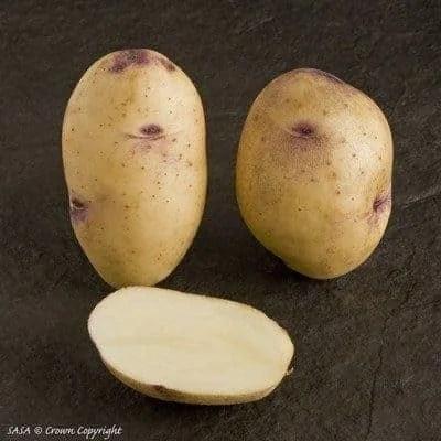 The Tastiest Potatoes to Grow