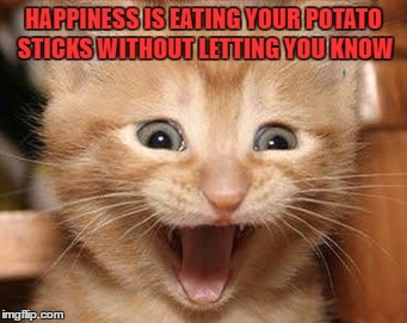 cat-happiness