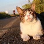 猫の腎臓病治った!が今年にも。それまでサプリ-毎日腎活の猫用-だ
