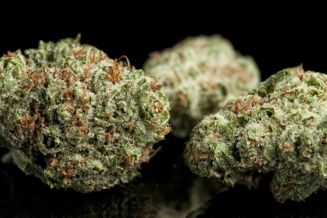 Is Cannabis a Psychedelic Drug 2