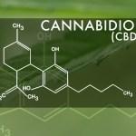 CBD, en búsqueda de la medicina cannábica
