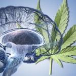 El cannabis revierte el daño cerebral
