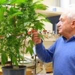 Raphael Mechoulam, el hombre que descubrió el THC