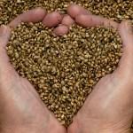 Semillas de Chía y Semillas de Cáñamo: ¿Cuáles son más saludables?