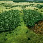 El dinero del narcotráfico está destruyendo enormes franjas de bosques en Centroamérica