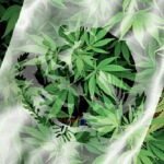 Farmacias mexicanas venderán medicamentos derivados de marihuana en 2018