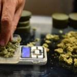 A cuánto se venderá la marihuana en Uruguay