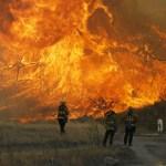 Arden campos de marihuana en California