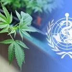 Organización Mundial de la Salud dice que el CBD no debería ser una sustancia controlada
