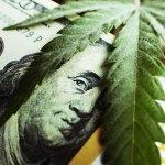 Empresa de cannabis empieza a cotizar en la bolsa de valores