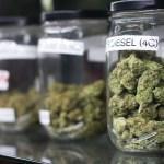 Peligran inmigrantes que consuman cannabis, aunque sea legal en California