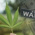 Wall Street: las acciones de la marihuana alcanzan su máximo histórico
