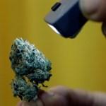 ¿Cuál es el verdadero vínculo entre la marihuana y la psicosis?