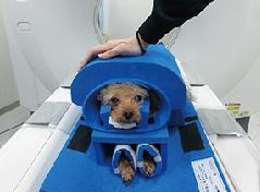 キャミックでの無麻酔CT時の犬の固定