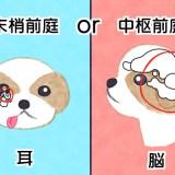 犬の前庭疾患、末梢前庭と中枢前庭の違い
